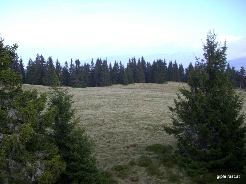 Immer wieder wird über Almwiesen gewandert