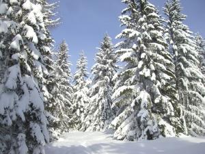 Winterwunderland #1