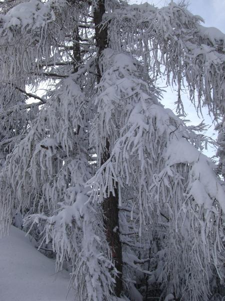 Winterwunderland #3