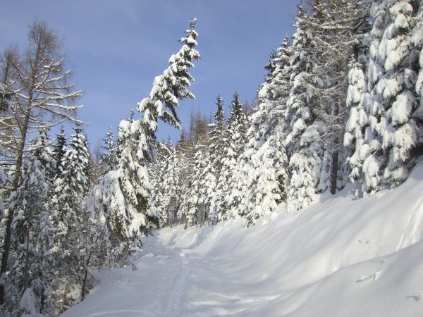 Winterwunderland #2