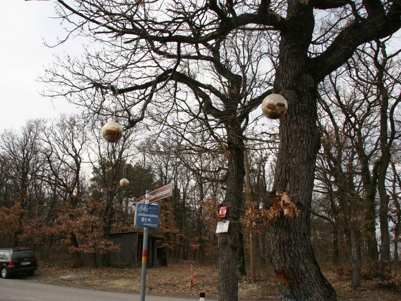 Seltsame Dinge wachsen hier auf Bäumen - Plastikkugeln mit Korken