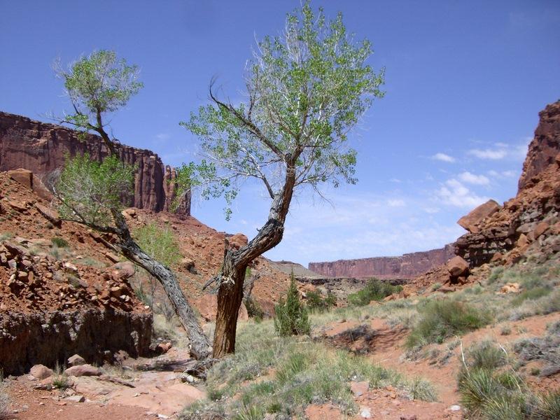 Am Grund des Canyons wird es grüner...