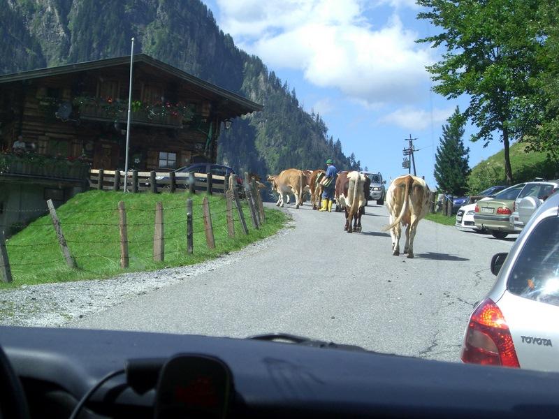 Ein ungewöhnlicher Verkehrsstau stellte den vor uns fahrenden Deutschen vor große Probleme