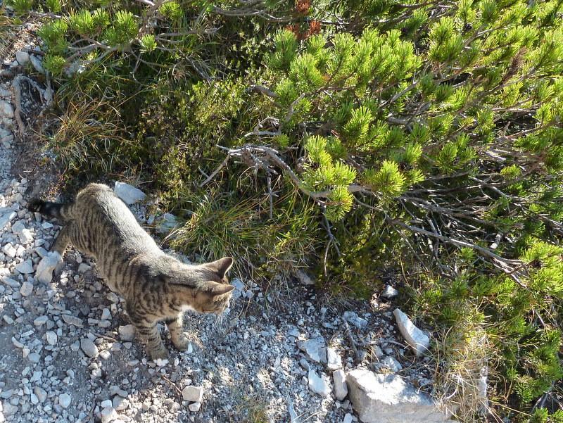 Exotische Bergfauna auf knapp 1800m Seehöhe