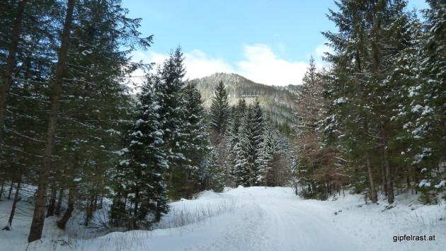 Die Forststraße ist zwar geräumt, es liegt aber genug Schnee