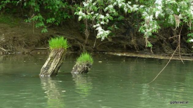 Seltsame Wesen leben im Wasser