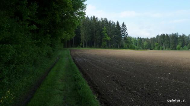 Zwischen Wäldern und Feldern