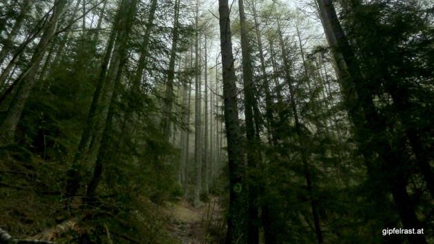 Düster: Zwischendurch hole ich den Nebel (fast) ein