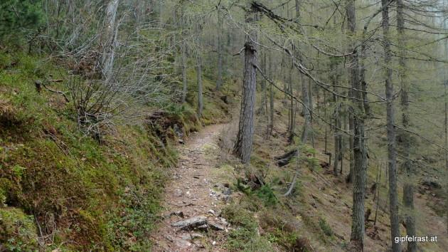 Wieder im alpinen Hochwald