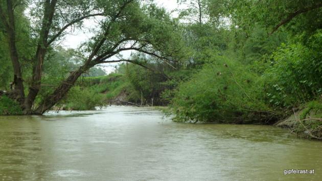 Hindernisse, der Baum im Hintergrund hätte uns fast ein Bad beschert