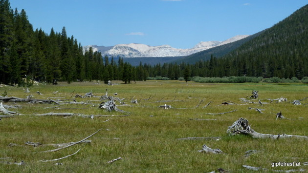 Meadow in Lyell Canyon