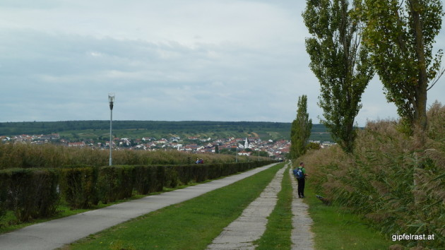 Auf der Seestrasse nach Mörbisch