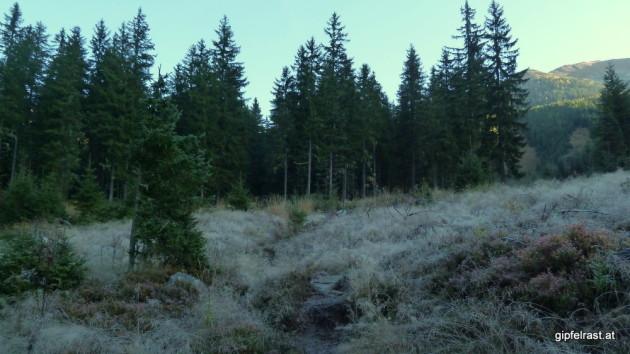Am Beginn des Weges liegt noch der Morgenfrost auf der Wiese