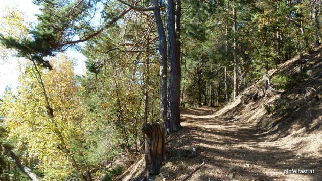 Hinauf durch den Wald
