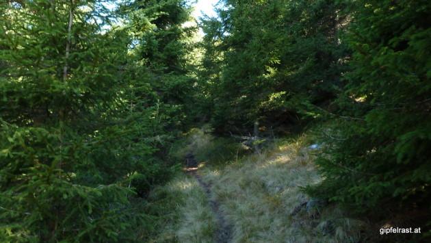 Der Wald wird lichter