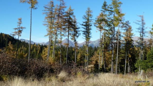 Die Seckauer Tauern lugen durch den Wald