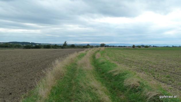 Feldweg, der uns nach Siegendorf bringt