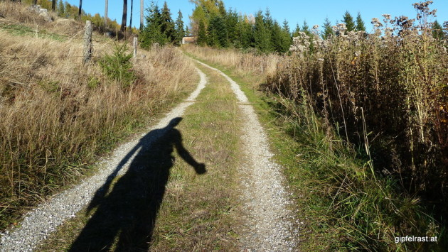 Forstweg unterhalb des Hölzelkogels