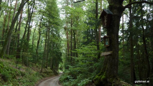 Herrgotteiche im Rohrbacher Wald