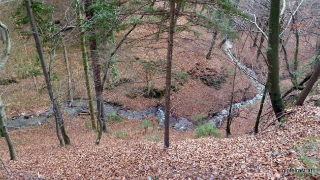 Der Bach im tief eingeschnittenen Königgraben