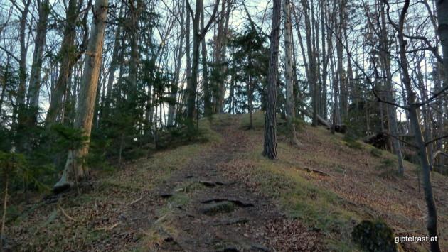 Eine runde Sache: der Gipfel des Gamskogels