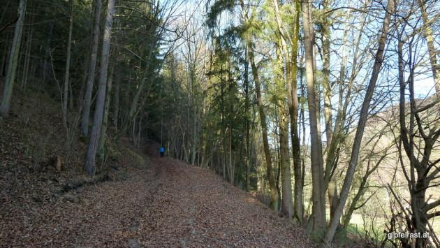 Hinauf zur Ruine Waldstein