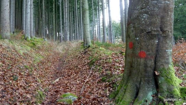 Waldweg und Markierungen