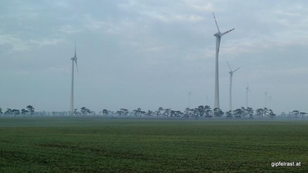 Kleine Bäume, große Windräder