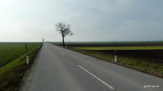 Die Straße nach Frauenkirchen (rechts am Horizont)