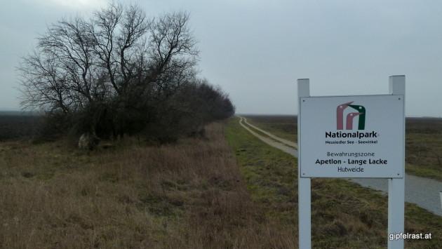 Der falsche Weg im Nationalpark Neusiedler See