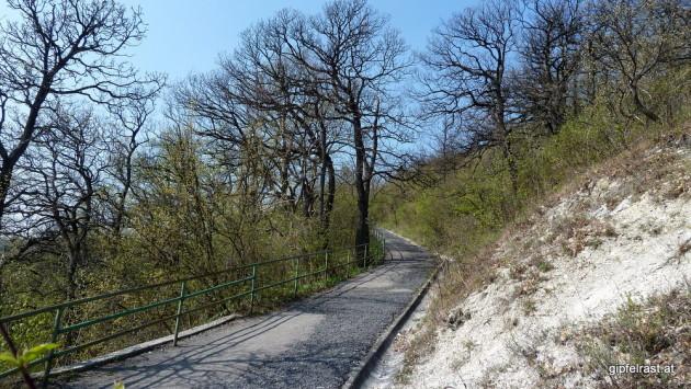 Über den Fadenstein auf den Leopoldsberg