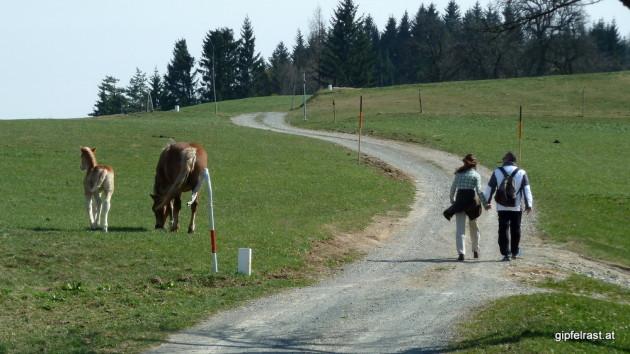 Slowenische Pferde als Grenzgänger