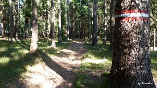 Waldweg zwischen Wultschau und Gabrielental