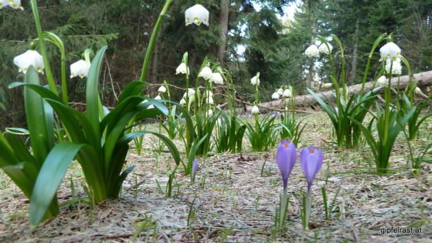 Noch mehr Frühlingsboten