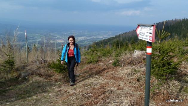 Mit Aussicht durch den Jungwald