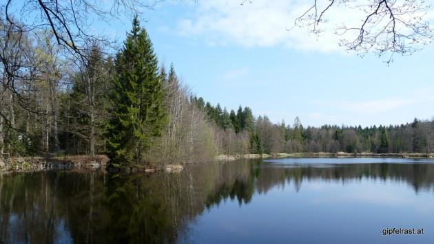 Idyllischer Teich im Wald
