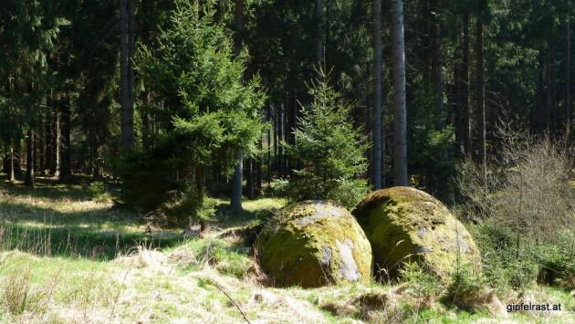 Der Weg ist gesäumt von moosbewachsenen Felsen