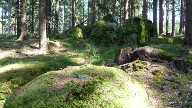 Moos, Granit, Sonne und Wald