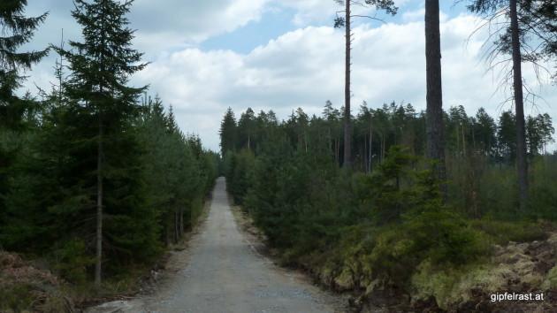 Unschöne Forstautobahn