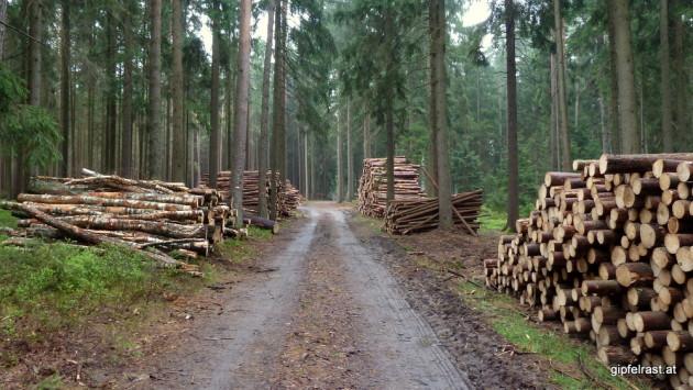 Wir genießen den Duft von frischem Holz