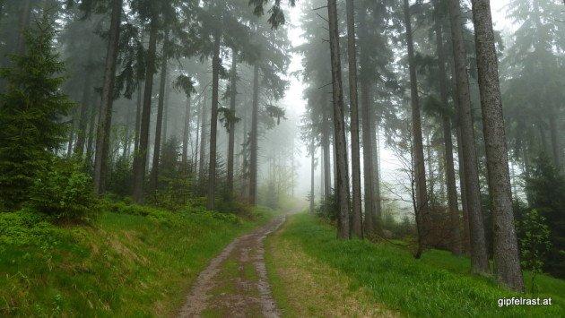 Durch mystischen Nebel hinauf zum Sternstein