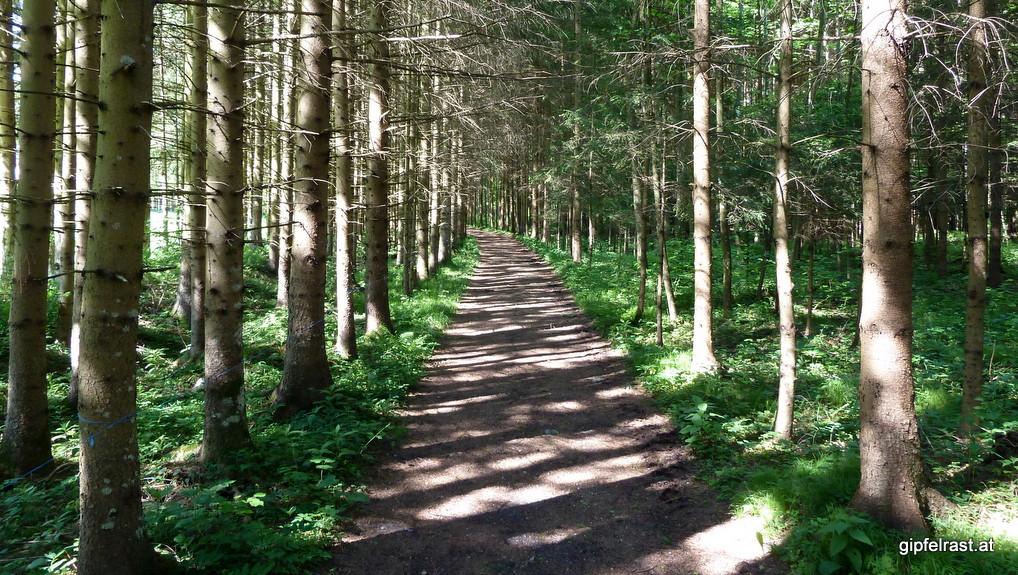 Dunkle Waldwege