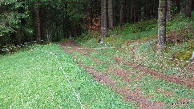 Mühlviertler Kühe wollen intellektuell gefordert werden: Ein Weidezaunlabyrinth