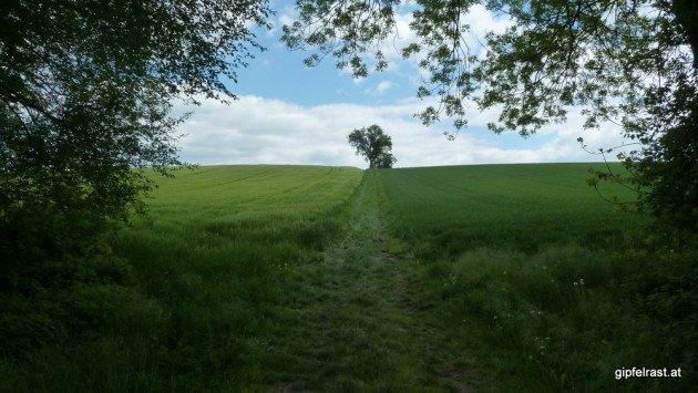 Es folgt ein Abschnitt mit schönen Wiesenwegen