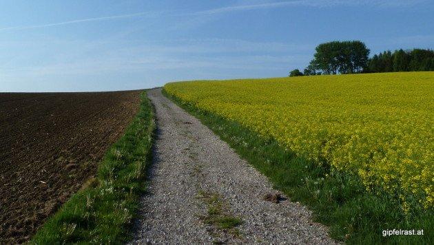 Zu Beginn des Tages marschiere ich durch scheinbar endlose Felder