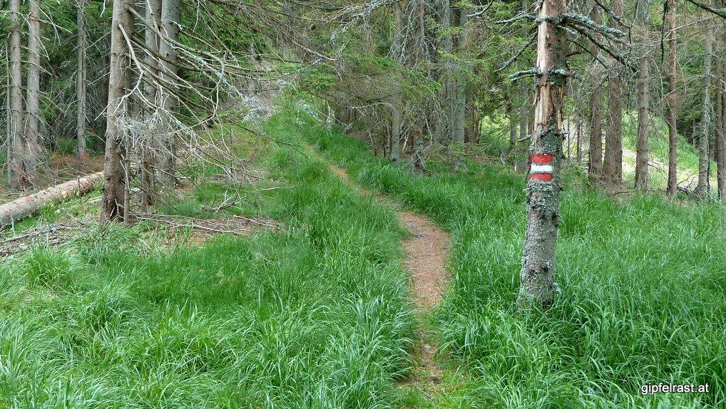 Durch Gras und Wald