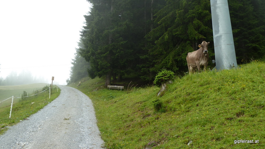 Aufstieg zur Starkenburger Hütte, die Nebel lichten sich