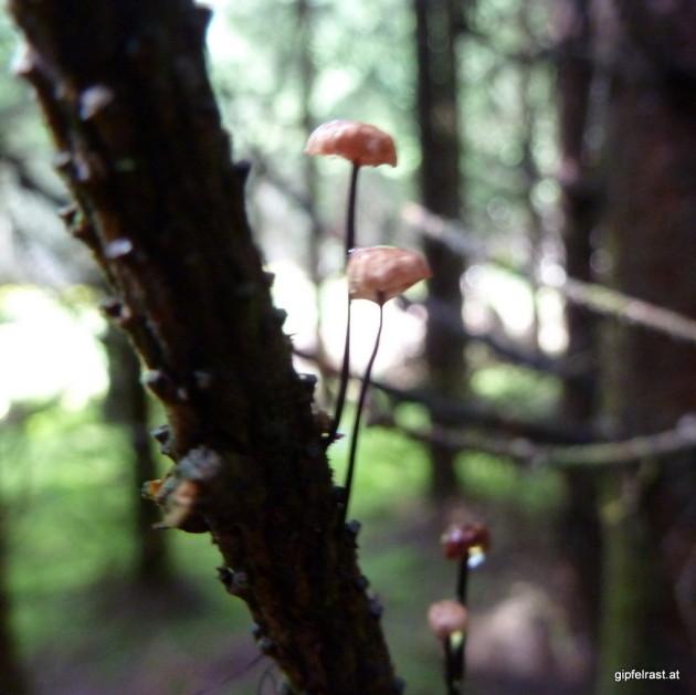 Auch auf den Bäumen wachsen die Pilze