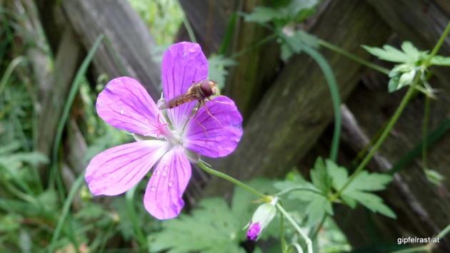 Blume und Insekt