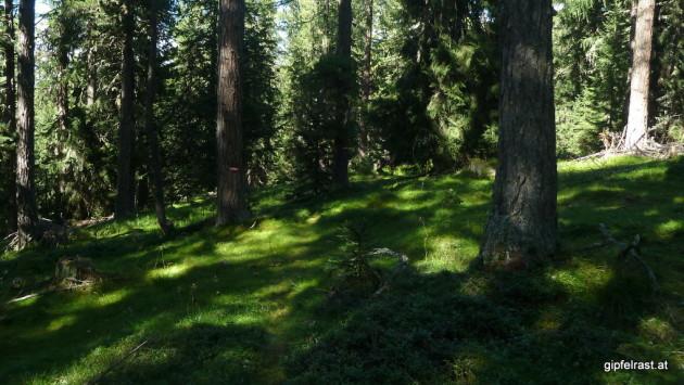 Hinab durch einen zauberhaften Wald
